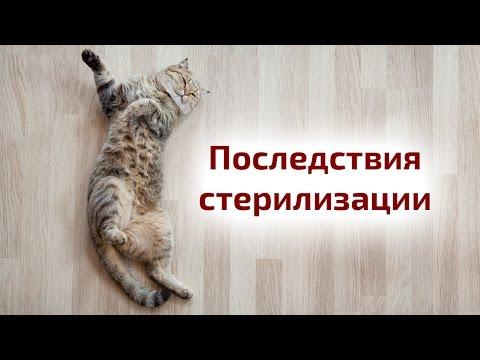 Вопрос: Стоит ли стрерилизавать кошку?