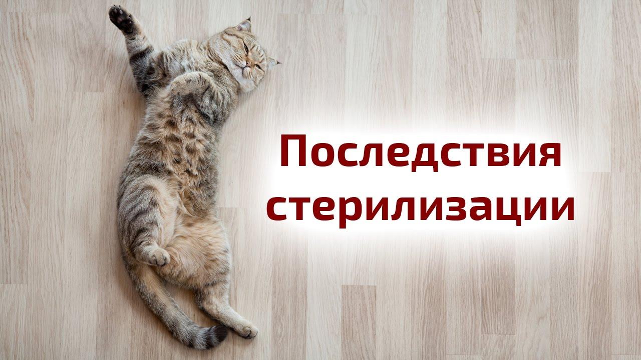Плюсы и минусы котов кошек