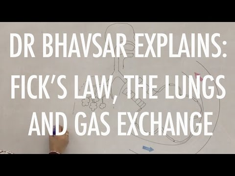 Fick's Law, the lungs and gas exchange