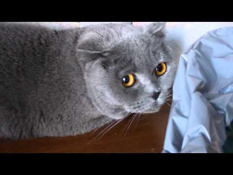 Guilty cat (Кошачий погром)
