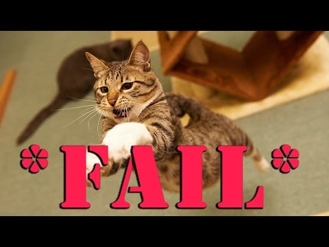 Smart Cat Fails to Jump ( May 2017 ) try not to laugh