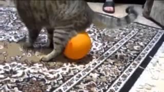 猫が静電気で風船が体から離れないトラブル:Cats trouble balloon has not separated from the body by an electrostatic thumbnail