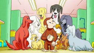 George O Curioso 🐵Contando Cães 🐵Jorge O Macaco Curioso🐵Desenhos Animados