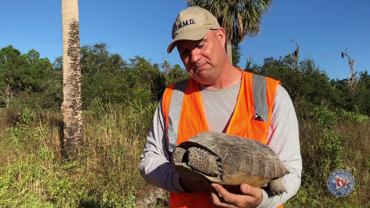 Gopher tortoise preservation spurs profitable cottage