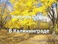 Золотая осень в Калининграде