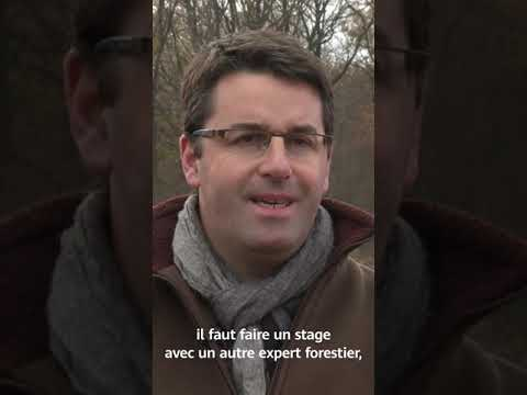 DIM Interview expert forestier Projet Plantation