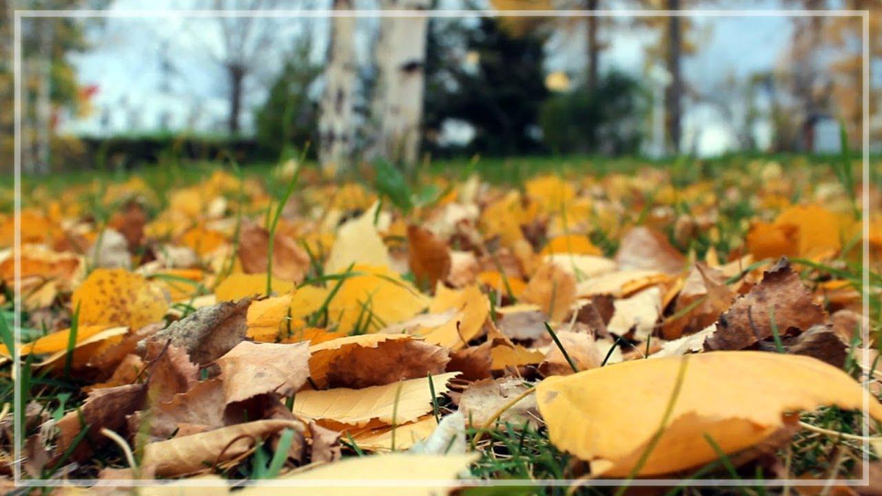 Осень в любимом парке и дворе на 1 мая - YouTube