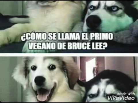 Memes de perros - YouTube