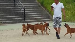 初めて階段を登れるようになったよ! 全国優良ブリーダーの子犬・交配犬...