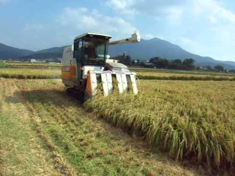 Rice harvesting in japan.mov