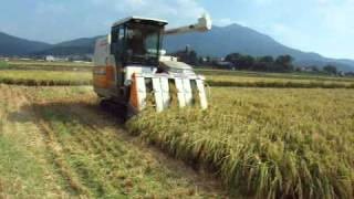 Rice harvesting in japan.mov