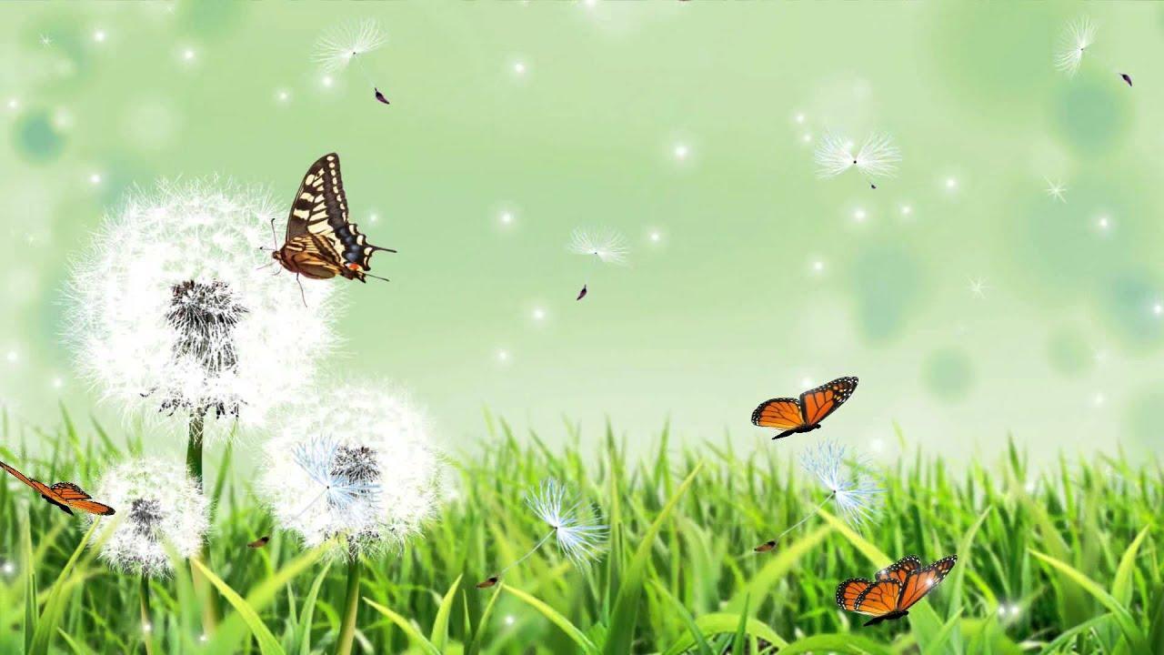 dandelion animated wallpaper       desktopanimated