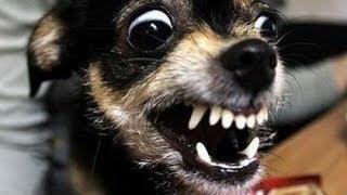 """НЕОБЫЧНЫЕ ТАБЛИЧКИ """"Осторожно!Злая собака!"""""""