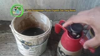 Cara Penggunaan Pupuk Organik Cair Yang Benar