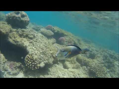 Coral Beach Resort Montazah Ex Rotana 4*, Sharm El Sheikh, Egyptиз YouTube · Длительность: 1 мин58 с