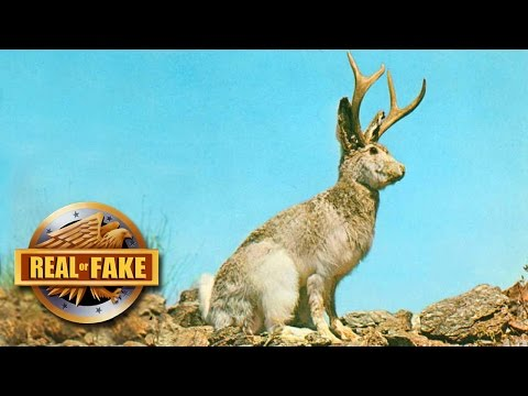 5  CRAZY 'REAL OR FAKES?'