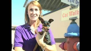 Arizona Humane Society - Ashleigh Goebel