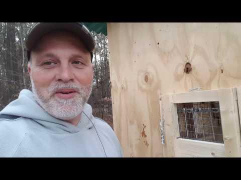 BEST WHITE HOMING PIGEONS TRAP DOOR