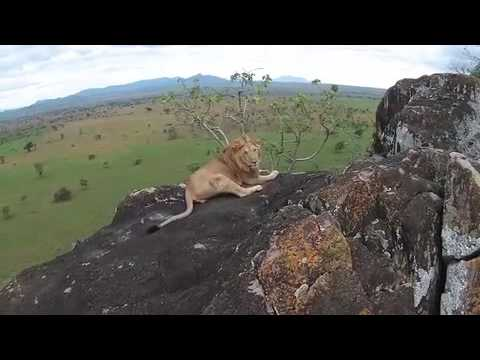 Behind-the-Scenes: Drone Video Wild African Animals | The Wildlife Docs