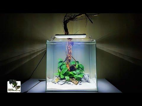 HOW TO: NO CO2 ,NO Filter ,No Ferts Beginner #4|Membuat Aquascape|水草造景