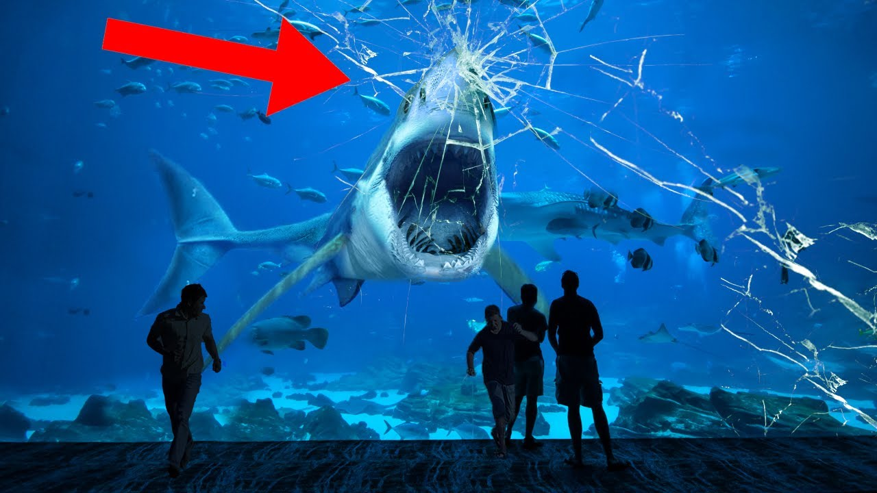 Here Is Why No Aquarium In The World Holds A Great White Shark