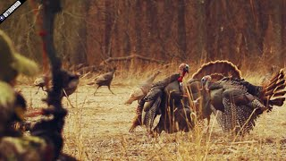 The Most Insane Turkey Bow Hunt Ever!