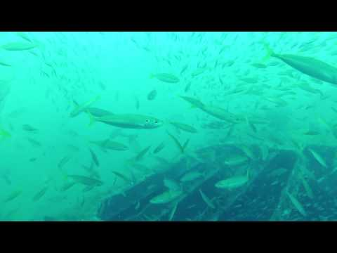 Gulf Of Mexico Shipwreck LOADED With Fish!!