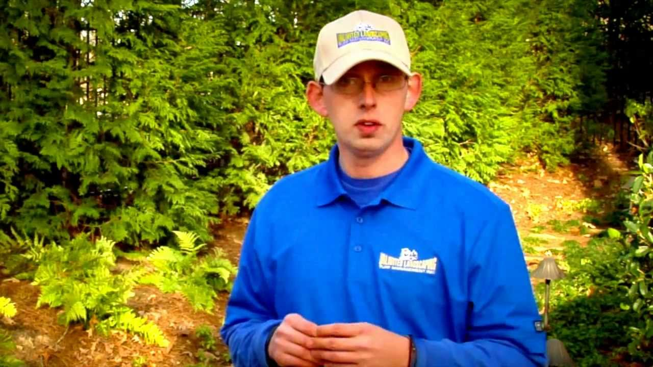 Stop weeds in flower beds - How Do I Stop Weeds From Growing In My Flower Bed And Islands Unlimited Landscaping Video Blog Youtube