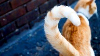 Зачем животным нужны хвосты