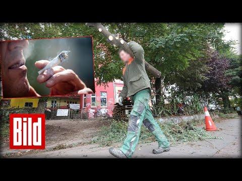 Kampf gegen Kiffer - Garten-Arbeiten gegen Dealer