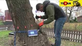 Ekspertyzy dendrologiczne Warszawa | diagnostyka drzew | www.tedan.pl