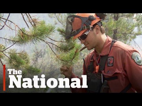 Meet the firefighters battling B.C.'s wildfires