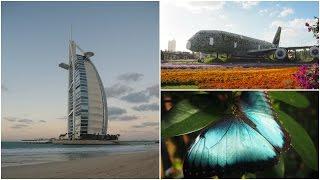 VLOG| Poslední den v Dubaji - Zábavní park, Motýlí zahrada, Burj Al Arab