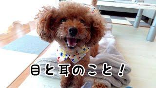 Taruちゃんは、この通り元気いっぱいです   いつも温かいコメント、あり...