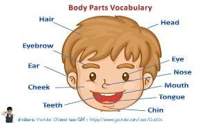 คำศัพท์ภาษาอังกฤษเกี่ยวกับส่วนต่างๆของร่างกาย พร้อมวิธีออกเสียงและคำแปล