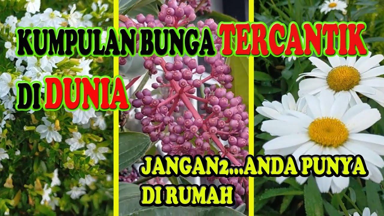 Kumpulan Bunga Tercantik Di Dunia Versi Wong Ndeso Youtube