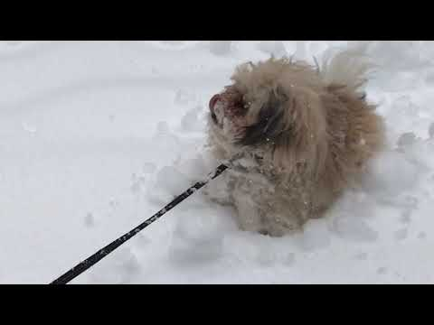 Little dog + deep snow = lotsa fun