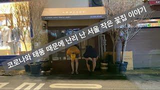 코로나와 태풍 때문에 난리 난 광화문 근처 서울 작은꽃…