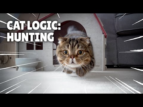 Cat Logic: Hunting | Kittisaurus