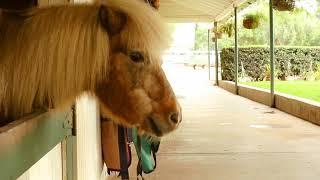 Ariel's Horse - Video Poodle Web Series