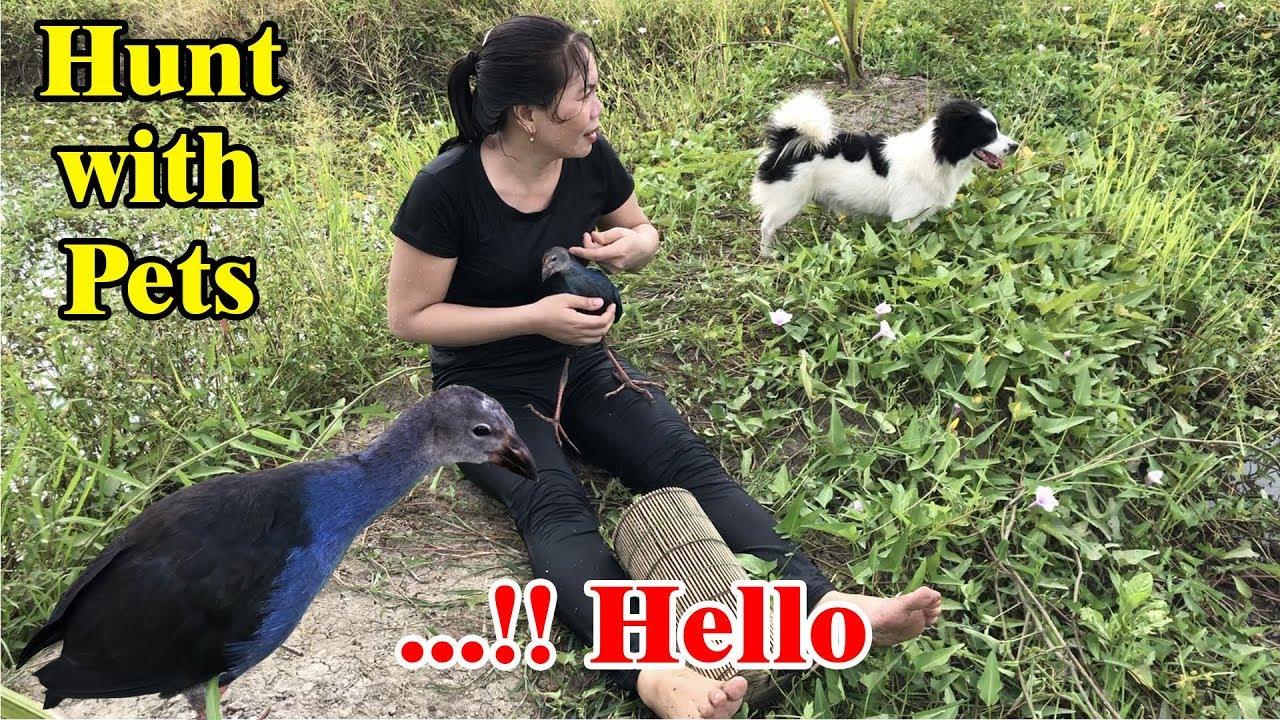 Hunt with pets | cô ten đi săn bắt cùng đội thú cưng thật là vui | CÔ TEN VLOG