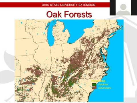 The Future of Oak Forests: Ecology, Managemet, and Regeneration
