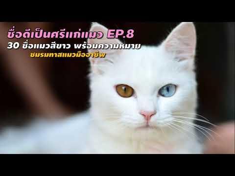 30 ชื่อแมวขาว ชื่อน้องแมวน่ารักๆ สำหรับการตั้งชื่อแมวตัวผู้และแมวตัวเมีย - ชื่อดีเป็นศรีแก่แมว EP.8
