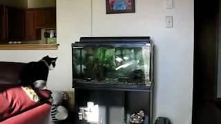 Cat Hits Head Against Aquarium