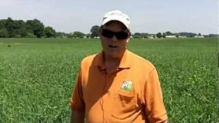 Using oats as a nurse crop starting alfalfa