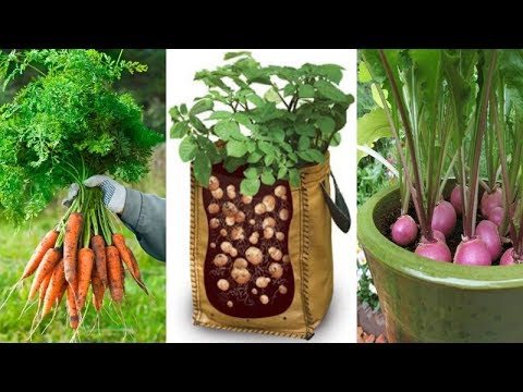 4 Of The Easiest Root Vegetables To Grow In Containers Even If You Live In Apartment