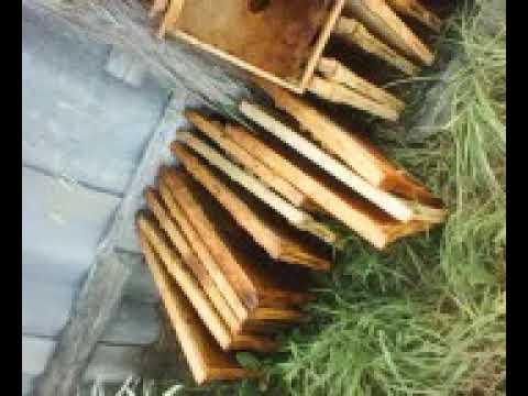 Массовая гибель пчел в Павловском районе, Ульяновская область (2)