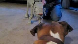 Guard Dog Boxer Vs Star Wars At-at