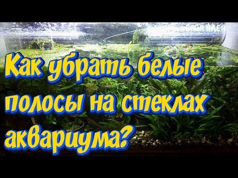 Чем отмыть аквариум от белого налета воды в домашних условиях
