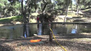 Sit Means Sit Dog Training | Across Water Retrieval